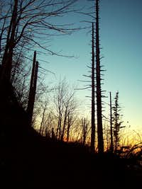 Evening Light in the Snags - Angel's Rest Trail