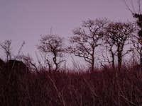 Angel's Rest Summit Trees