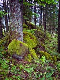 Ruckel Ridge Forest