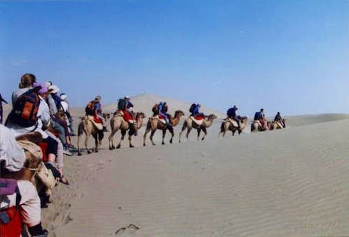 A camel train in the...