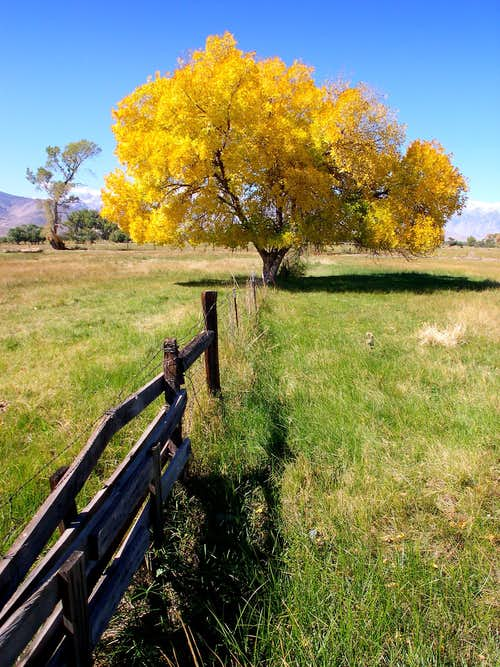 Owens Valley Autumn