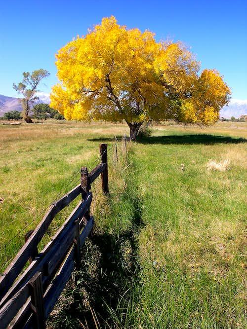Owens Valley Autumn