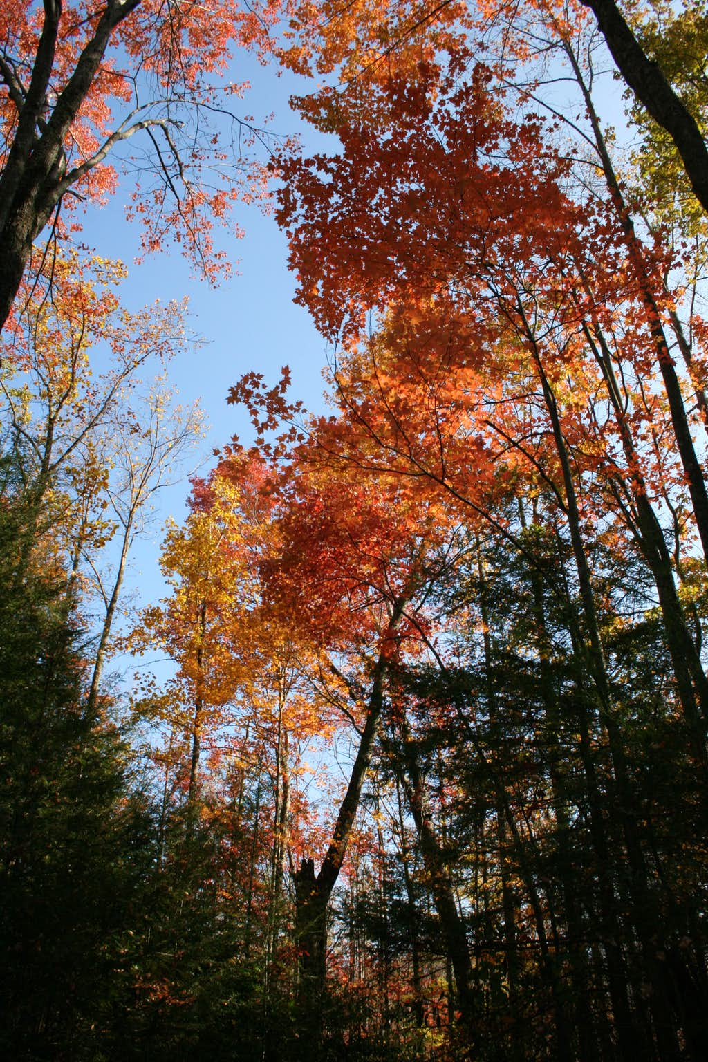 Late Fall Color on Maddron Bald Trail