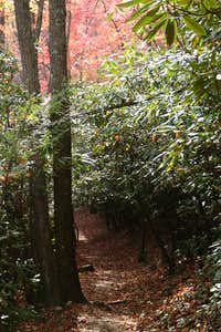 Rhododendron Tunnel on Gabes Mountain