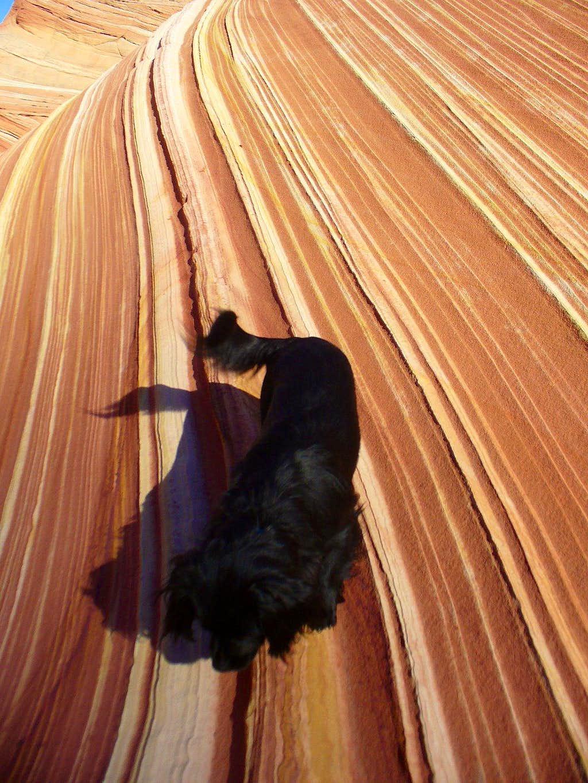 Max dog-surfing