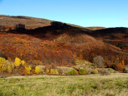 Forest above Répáshuta (village)