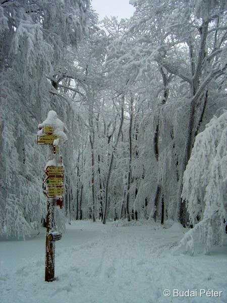 Frozen life on Csóványos