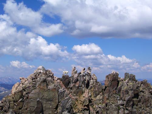 The Owner of the Citadel
