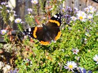 Late autumn butterfly