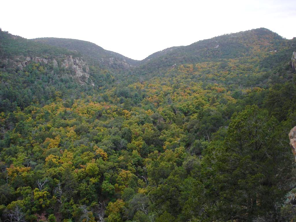 Fall color in Boot Canyon