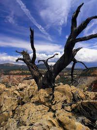 Top of Checkerboard Mesa - ZNP