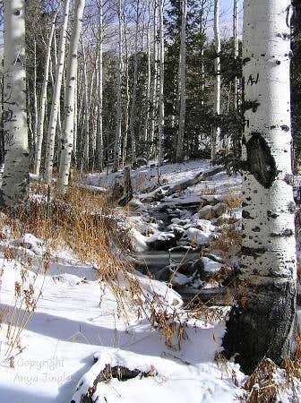 Aspens and Timber Creek