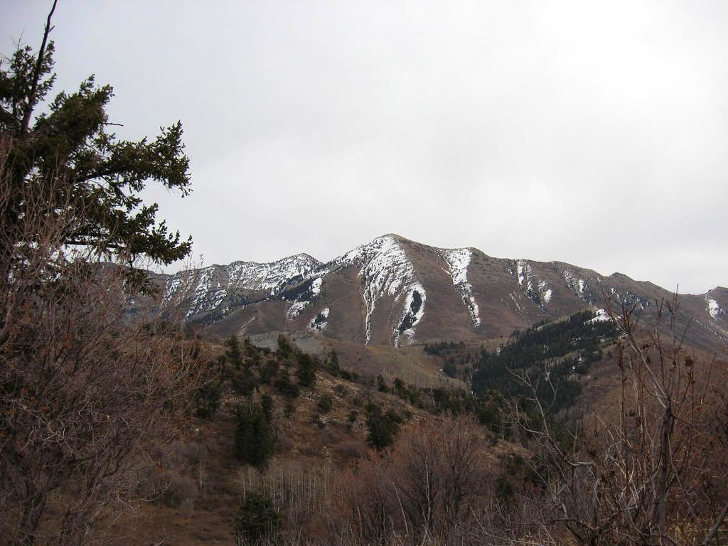 Provo Peak from Y Mountain