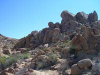 Mastodon Peak via Lost Palms Oasis Trail