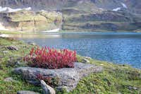 Flowers & Dodhipat Lake, Kaghan Valley, Pakistan