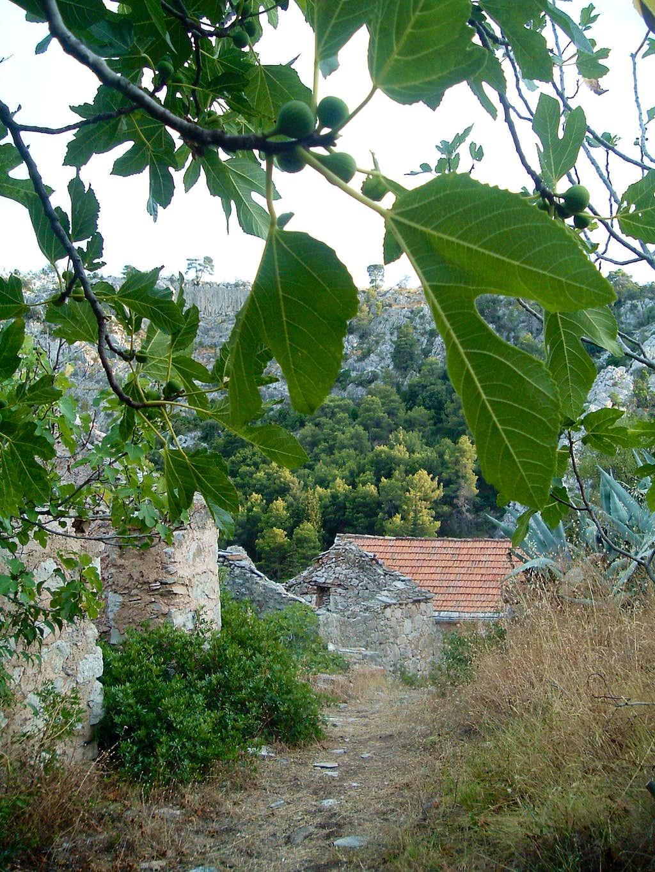 Malo Grablje, Hvar island, Croatia