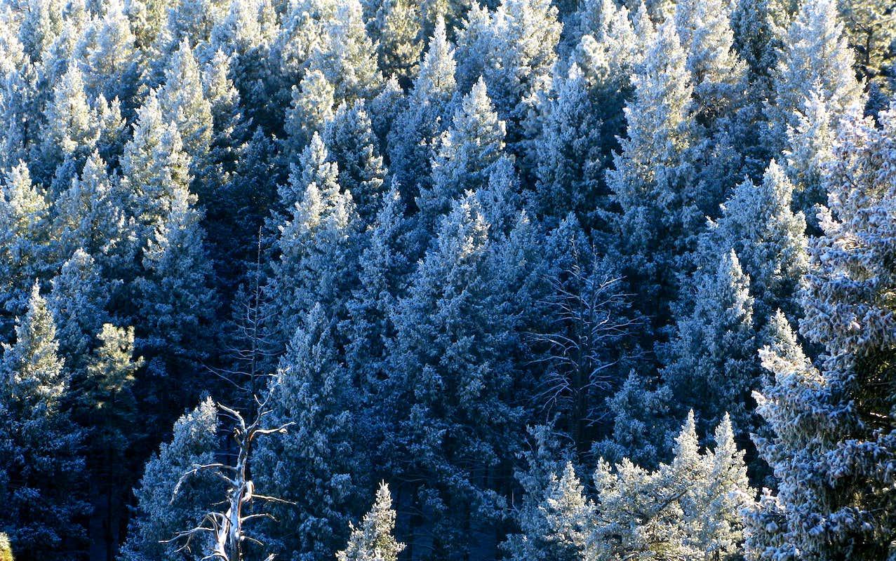 Douglas Fir Forest : Photos, Diagrams & Topos : SummitPost  Douglas Fir Forest