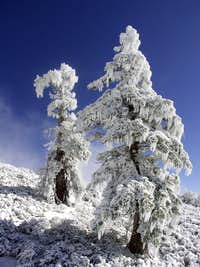 Iced Trees on Baldy