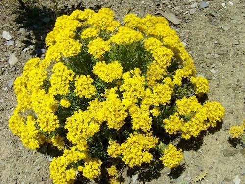 Iran's flora