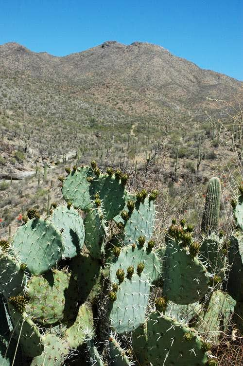 Wasson and Prickly Pear