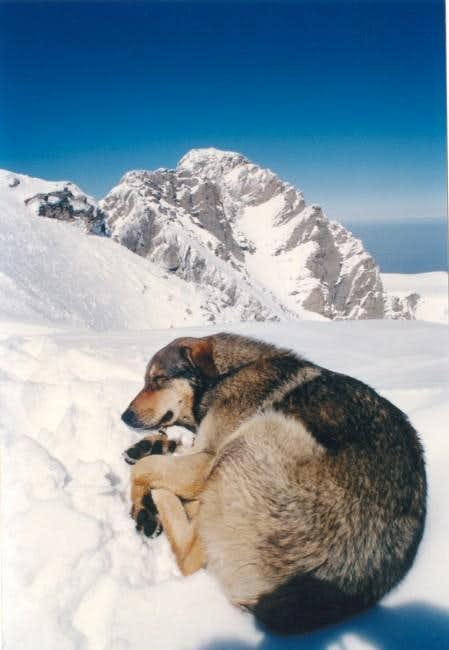 A climber's best friend! The...