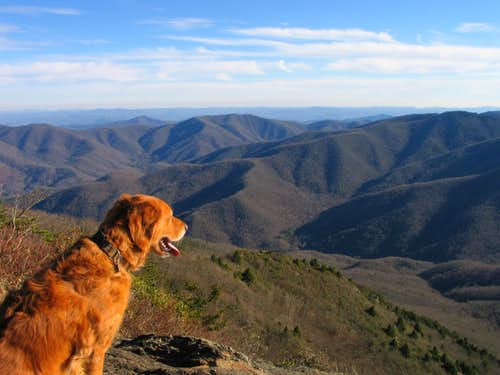 Taking in Pisgah NF from Cold Mountain Summit