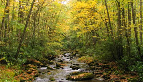 Fall colors along Straight Fork Creek