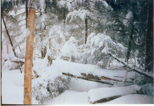 Winter 1994 Clingmans Dome....