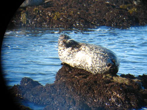 Seal at San Simeon, CA