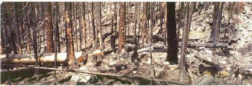 Forest fires burned this...