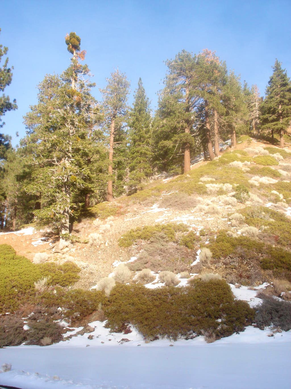 Trail from Lodgepole Picnic Area