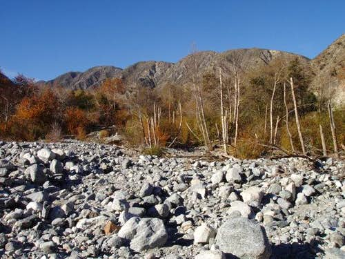Sycamores and Rocks in Lytle Creek