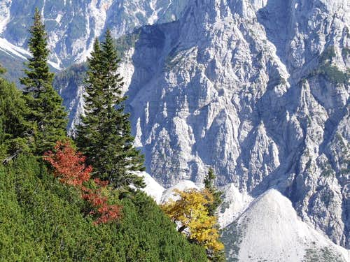 Trees and rockfaces