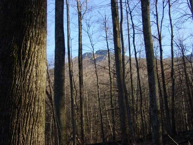 Old Rag summit from forest...