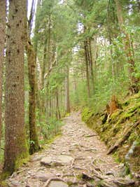 Mount Sterling Trail