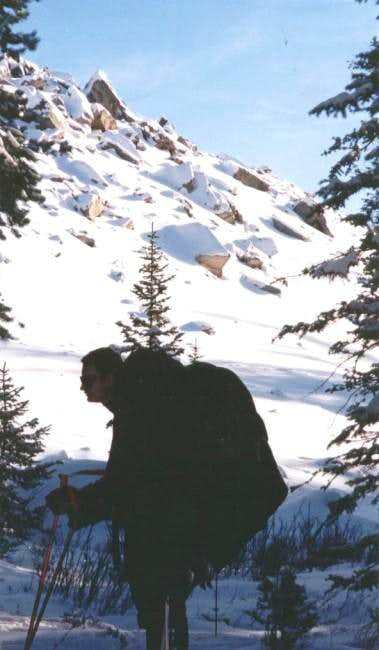 Yellow Pine Trail