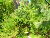 Santa Elena Canyon foliage