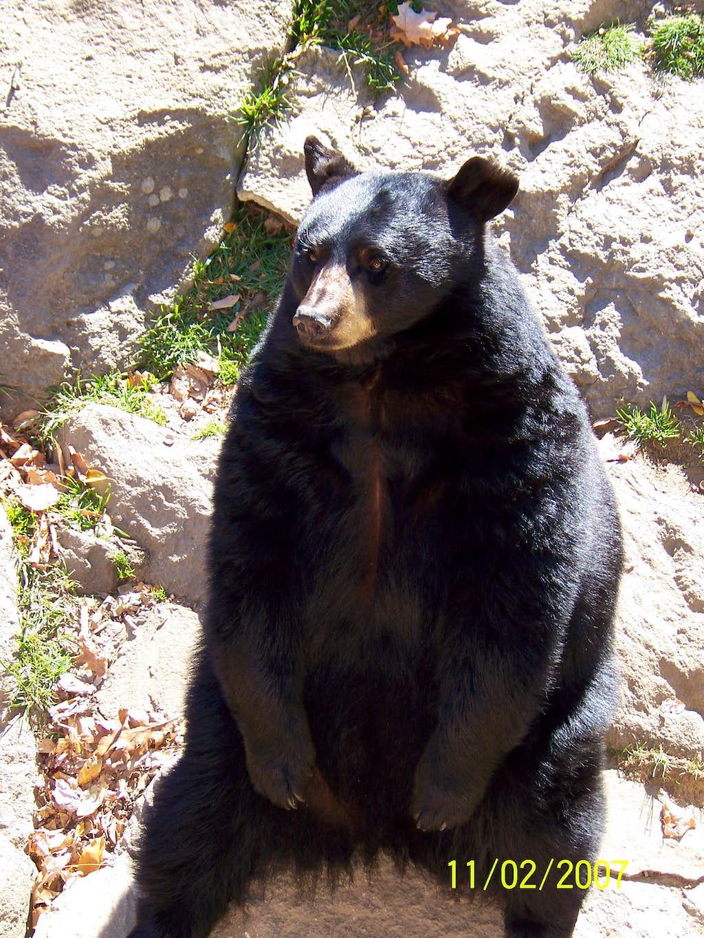 It's The Bear !!!