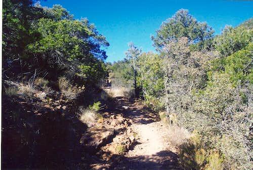 Lion on trail