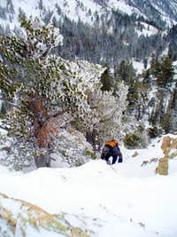 Grizz climbing snowbound West Ridge of Storm Mtn