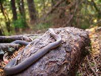 Snake-Boarstone Mountain