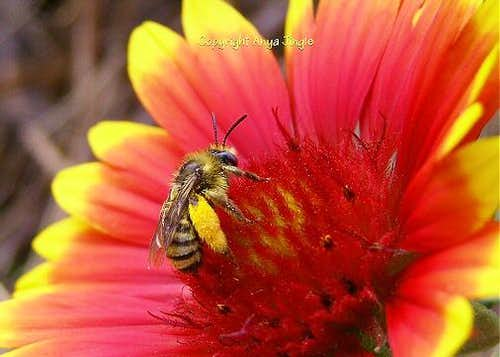 To Be a Bee