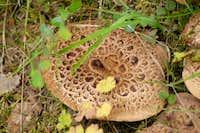 BC Mushrooms