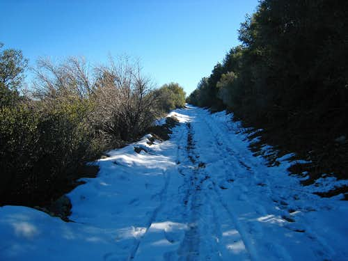 Snow on Josephine Fire Road