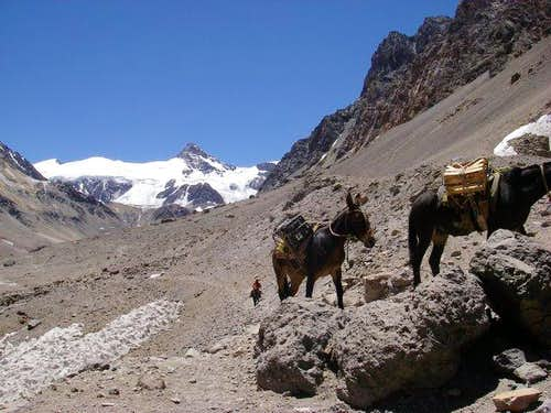 Obligatory mule picture from Plaza de Mulas