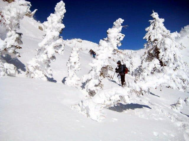 Rime trees underneath Willows Divide