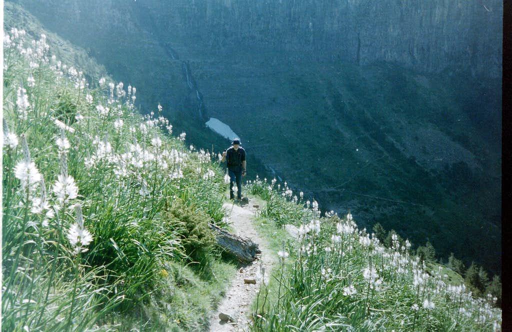 Alpine meadows in the Ordesa