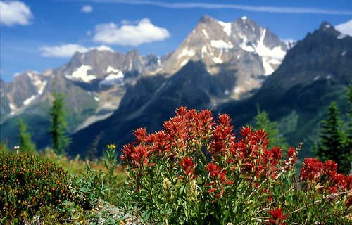 Common Red Paintbrush