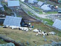 Shepherd's huts around...