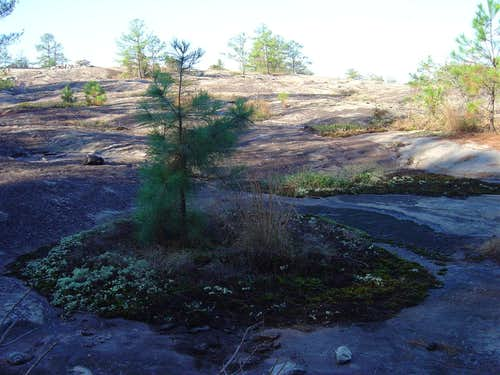 Arabia Mountain, Georgia